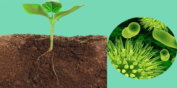زیست گیاهی نظام جدید حرف آخر